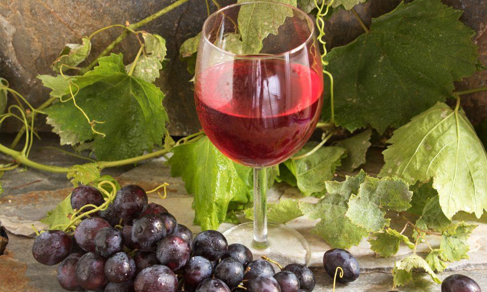Zielona Góra kraina wina